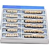 Oral Dentistry アクリル樹脂 義歯 歯模型 歯科材料 歯科用 ハロウィンホラーの小道具 ホワイト義歯23 A2 /A3 アップ&ダウン 168/箱 (A3)