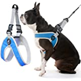 Gooby - Simple Step-in Harness III, Small Dog Harness Scratch Resistant Breathable Mesh, Blue, Small