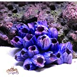 "Danmu 1Pc of Polyresin Coral Ornaments, Aquarium Coral Decor for Fish Tank Aquarium Decoration 3 7/10"" x 2 9/10"" x 1 9/10"" (P"