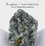 Seraphinite Live at Motion Blue YOKOHAMA