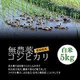 無農薬米コシヒカリ 白米(精米) 5kg[即日発送]/アイガモ農法で育てた安心・安全の新潟米