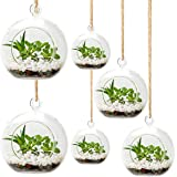 UMEIED Hanging Glass Globes Terrarium Container Set of 6 - Air Plant Succulent Holder, Hanging Tealight Candle Holders, 3 Dif