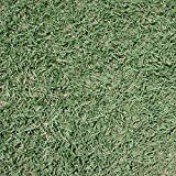 【種 2kg】 バミューダグラス サンデビル2 芝生用 矮性品種 緑肥 [播種期:4~7月] 雪印種苗 米S代不