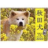 アートプリントジャパン 2020年 秋田犬カレンダー vol.021 1000109230