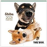 【THE DOG】 カレンダー 大判サイズ ≪柴≫ (2021年)