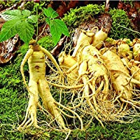 Rosepoem 人参種子 50個