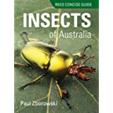 Reed Concise Gd Insects of Australia
