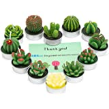 AMASKY Handmade Delicate Succulent Cactus Candles for Birthday Party Wedding Spa Home Decoration, 12 Pcs in Pack.