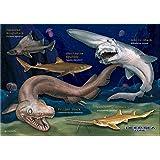 深海ザメ B5サイズ 330ピース ミュージアム ジグソーパズル