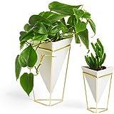 Umbra 1004372-524 Trigg Desktop Planter Vase & Geometric Container-for Succulent, Air, Mini Cactus, Faux Plants and More, Des
