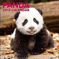 グリーティングライフ 2019年 パンダ カレンダー 壁掛け C-1039-PA 1月始まり
