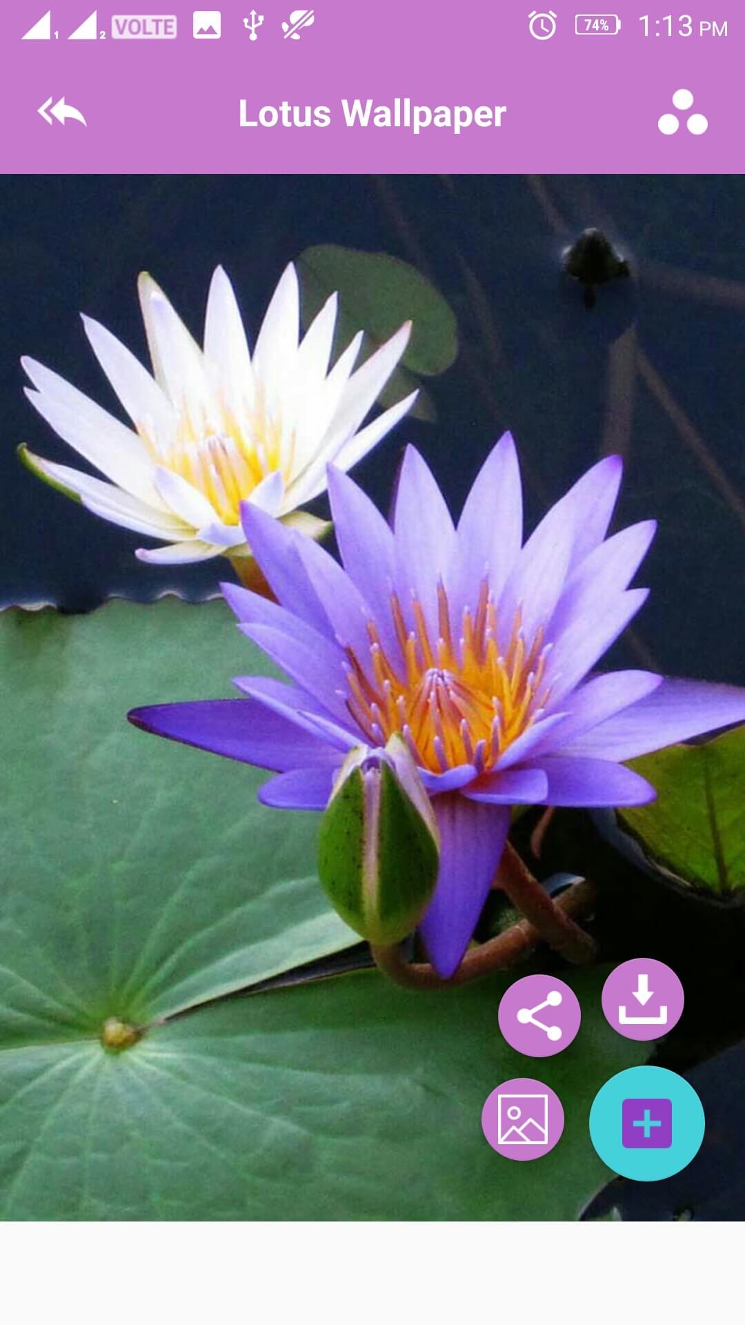 amazon co jp lotus wallpaper android アプリストア