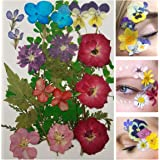 Face Flowers - Real Dried and Pressed Flowers for Face - Festival Makeup Rave Accessories (Medley 1)