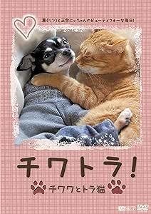 シンフォレストDVD チワトラ! ★チワワとトラ猫☆凛(リン)と正宗にぃちゃんのビューティフォーな毎日!