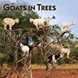 Goats in Trees 2021 12 x 12 Inch Monthly Square Wall Calendar, Domestic Funny Farm Animals