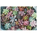KLL Succulent Plants Puzzles for Adults 500 and 1000 Piece Wooden Jigsaw Puzzles Educational Intellectual Decompressing Funny