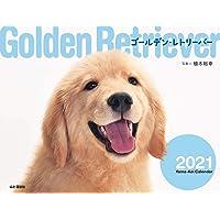 カレンダー2021 ゴールデン・レトリーバー (月めくり・壁掛け) (ヤマケイカレンダー2021)
