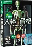 人体骨格ミュージアム-光る1/6骨格模型 (科学と学習PRESENTS)