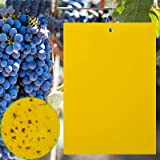Home-Mart 10 Pcs Sticky Trap, Dual-Sided Yellow Sticky Traps with Strong Glue, 15X20cm, Twist Ties Included for Flying Plant