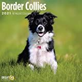 Bright Day Calendars 2021 Border Collies Wall Calendar by Bright Day, 12 x 12 Inch, Cute Dog Puppy
