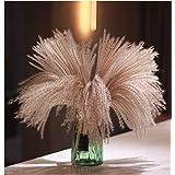 Fluffy Pampas Grass Reed Flower, Real Natural Dried Plant Flower Bunch Decoration for Vase Filler, Festival Christmas Ornamen