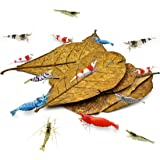 SunGrow Catappa Indian Almond Shrimp Leaves, Provide Shelter and Food, Additional Source of Nutrition, Perfect for Breeding a