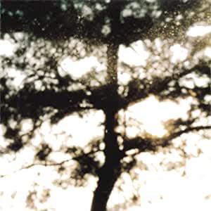 ECDYSIS ― SUMMER IN THE FOREST