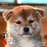 カレンダー2021 子柴 こしば (月めくり・卓上・壁掛け) (ヤマケイカレンダー2021)