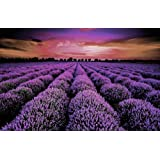 ジグソーパズル 1000ピース プロヴァンスのラベンダー畑 美しい風景 完成サイズ70×50cm