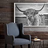Scottish Highland Cow Art Print Poster Canvas Print Wall Art, Unframed, for Wall Decor Home Decor (cow1, 12x18 inch)
