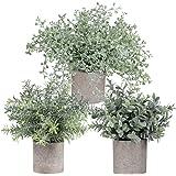 Winlyn ミニ鉢植え植え植え植え植え植え木ユーカリ ツヤギのローズマリーの植木鉢 人工鉢植え 小さな観葉植物 高さ8.8インチ-10インチ 屋内植物 テーブルトップ 装飾 センターピース 3パック