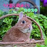 うさ暮ら週めくりカレンダー2020 (壁掛け)