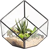 NCYP 3.93 inches Geometric Decorative Terrarium Cube Inclined Clear Glass Planter Tabletop Black Small Air Plant Holder Displ