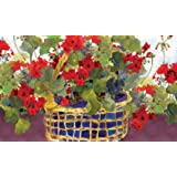 Toland Home Garden Geranium Basket 18 x 30 Inch Decorative Floor Mat Floral Colorful Red Flower Doormat