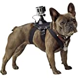 GoPro Fetch (Dog Harness) DVC Accessories,Black