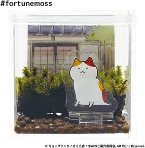 Fortune Moss まめねこ (あずき)