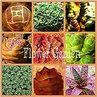 100種子リトープスPseudotruncatellaリビングストーン珍しい多肉植物種子ホームガーデン植物種子、#1Vqcij