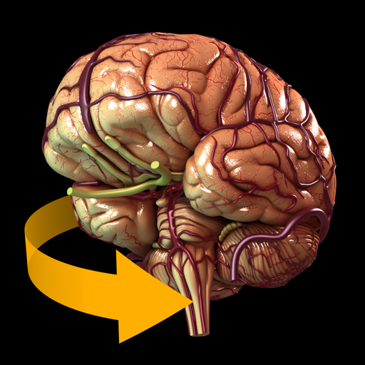 Brain - 3D Atlas of Anatomy,Catfish Animation Studio,Whenbuy.jp ...