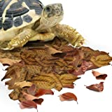 SunGrow Mini Leaf Litter for Reptiles, Maintain Humidity in Terrarium, Provide Shelter & Hiding Spot to Reptiles, Promote Bre