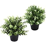 THE BLOOM TIMES 2 Pack Artificial Plants Indoor, Small Fake Green Plants Potted , Faux Boxwood Greenery in Pots Modern House
