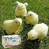 4 pcs Spring Easter Chick Decor - Realistic Eat Fly Yellow Baby Chick Lifelike Furry Chicken Figurine Rabbit Fur Plush Animal