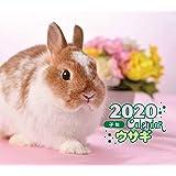 2020年 ミニ判カレンダー ウサギ