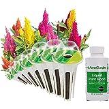AeroGarden Rainbow Fire Seed Kit (7-Pod)