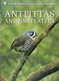 Antpittas and Gnateaters (Helm Identification Guides)