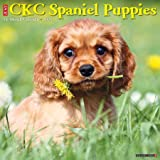 Just Cavalier King Charles Spaniel Puppies 2021 Wall Calendar (Dog Breed Calendar)