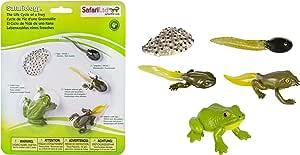 サファリ Science Series Life Cycle Of A Frog 269129 (並行輸入)