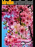 河津桜・早春の感動