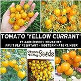 Cherry Tomato Yellow Currant 10+ Seeds Heirloom Vegetable Garden Spring Summer