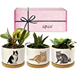 GIFTAGIRL Cat Gifts for Cat Lovers - Crazy Cat Lady Gifts or Cat Themed Gifts Like Our Cat Planters, are Great Cat Lover Gift