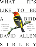 What It's Like to Be a Bird: From Flying to Nesting, Eating to Singing--What Birds Are Doing, and Why (Sibley Guides) (English Edition)